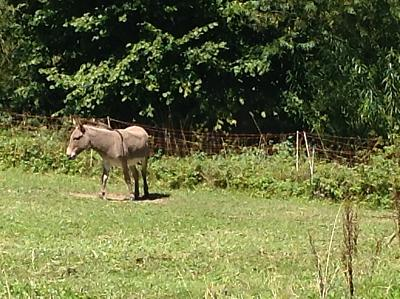 get-your-donkey-fix-here-img_0363.jpg