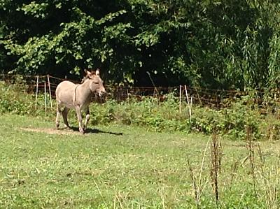 get-your-donkey-fix-here-img_0362.jpg