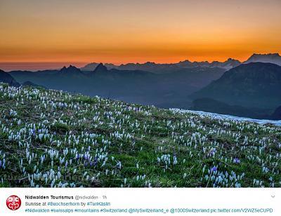when-where-can-find-blooming-crocuses-fields-crocus.jpg