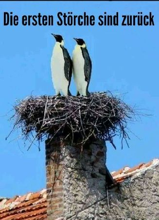 Name:  Stoerche_Pinguine.jpg Views: 120 Size:  33.9 KB
