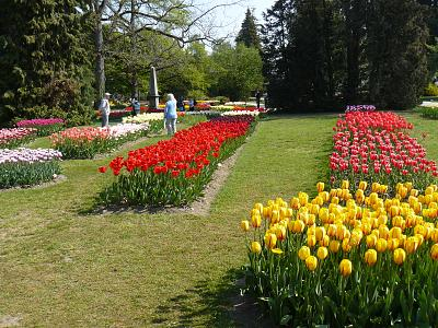 scenic-montain-train-journey-tulips-good-food-p1220161.jpg