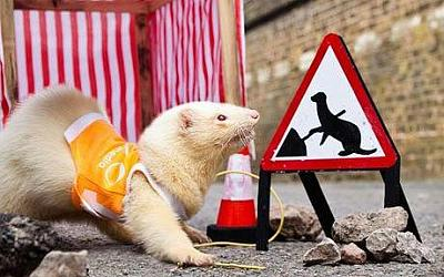 cable-ferret-required-re-site-cable-wall-socket-cable-ferret.jpg